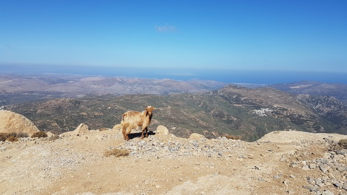 incentive-travel-destination-athens-and-crete-goat