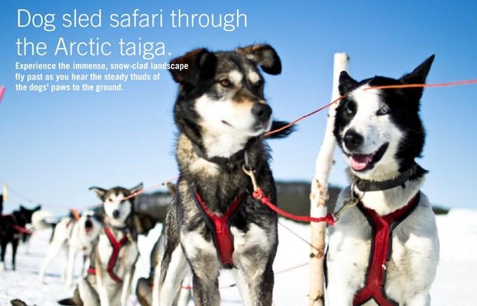 Incentive Travel - Swedish Lapland - Dog Sled Safari